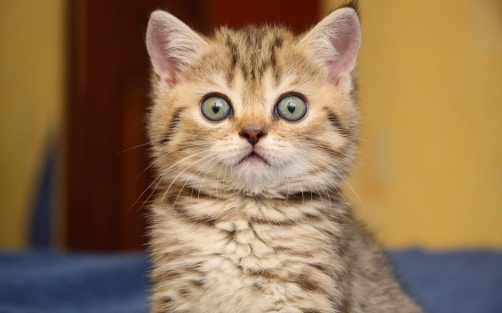 Animals_Cats_Surprised_kitten_024388_.jpg