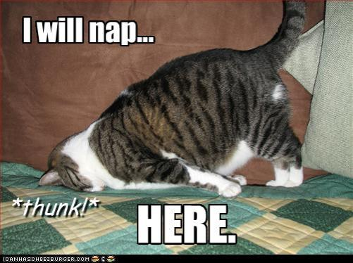 funny-pictures-cat-will-nap-here.jpg